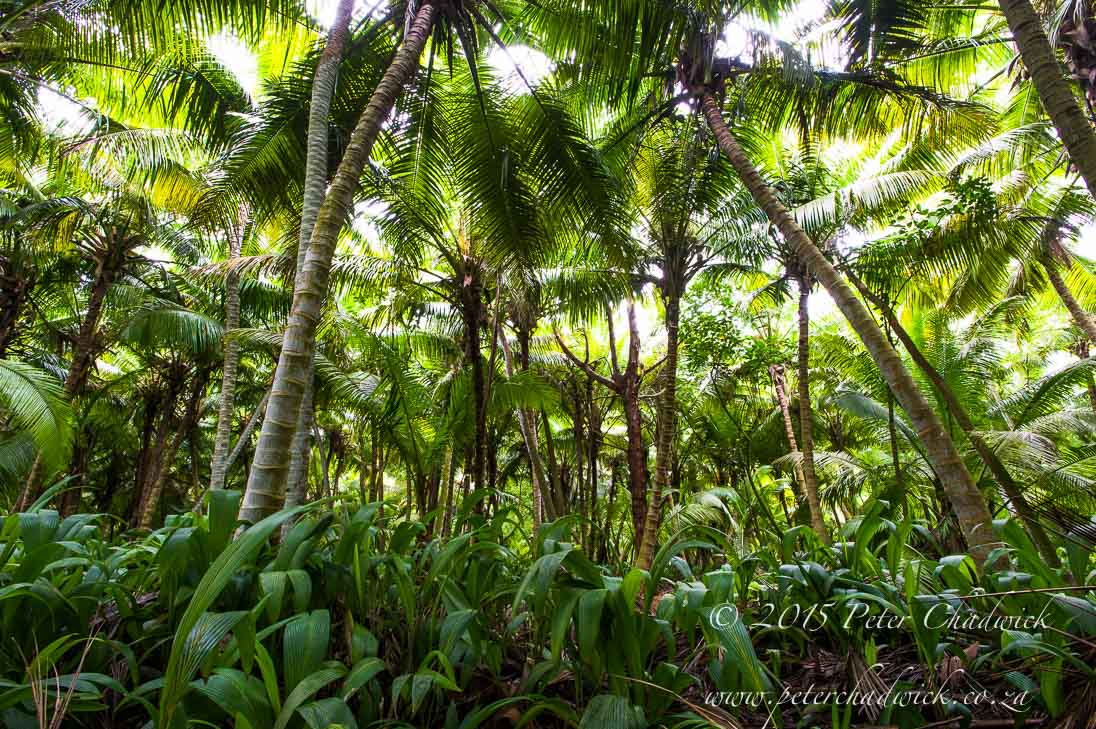 Coconut Plantations_©PeterChadwick_AfricanConservationPhotographer
